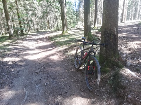 Mtb route 5 in Houffalize